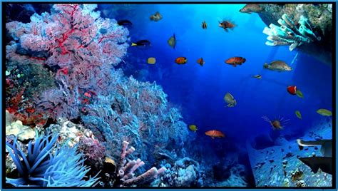 3d Animated Aquarium Wallpaper Free - aquarium screensavers 3d wallpaper best hd wallpapers