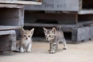japanese cat cat heaven island in japan photos janiceheck
