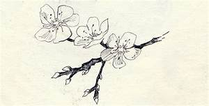 The gallery for --> Almond Blossom Drawing