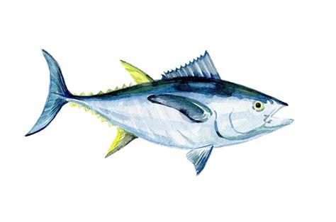 guide  tuna yellowfin bonito blue fin