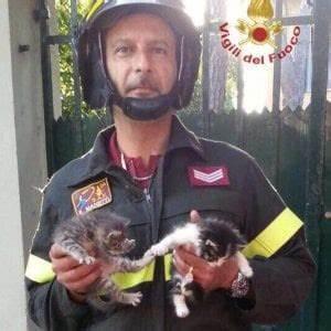 Pisa, gattini abbandonati su un cipresso dalla mamma: salvati Repubblica it