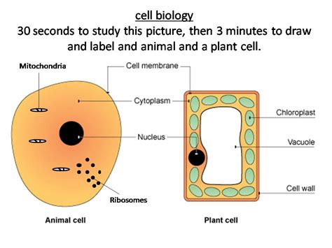 plant  animal cells structure  function  pemi