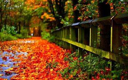Leaves Autumn 1080p 4k Wallpapers 2k Screen