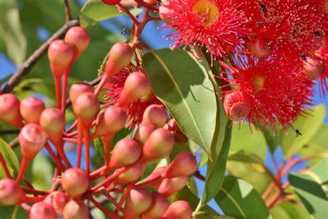 fiori australiani fiori australiani cosa sono e a cosa servono donnad