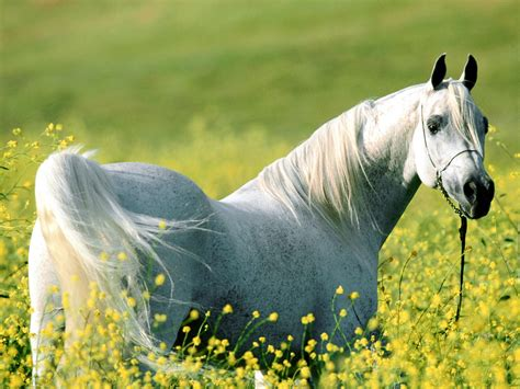 Horse Wallpapers Wild Horses Photos
