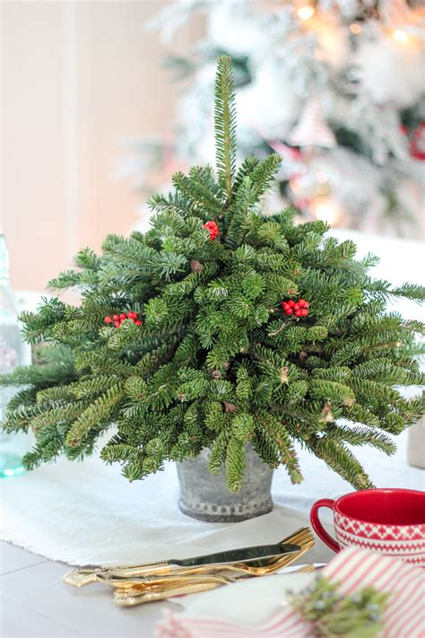 picture of diy tabletop christmas tree from free fir clippings
