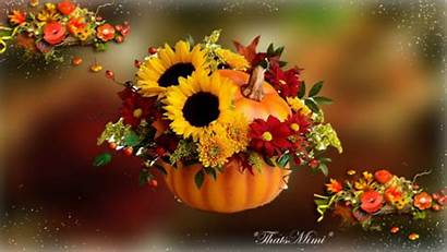 Fall Flowers Wallpapertag Android