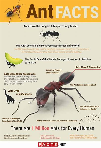 Ant Facts Lifespan Biology Diet