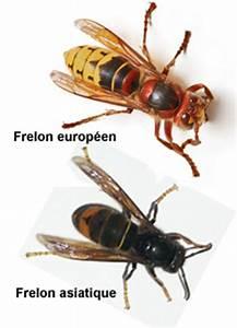 Piege A Frelon : un blog pour les abeilles pi ge frelons asiatiques ~ Farleysfitness.com Idées de Décoration