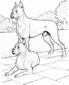 Realistic Dog Face Coloring Page Coloring Pages