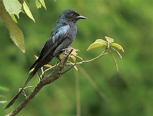 Pets Animals and Pet Birds: Indian Birds Information