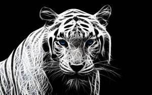 Tigre blanco Fondo de Pantalla and Fondo de escritorio ...