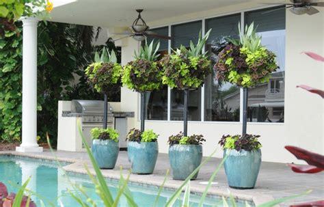 pflanzen für terrasse pflanzen in t 246 pfen und k 252 beln versch 246 nern die terrasse