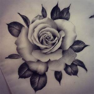 Drawn rose black gray rose - Pencil and in color drawn ...
