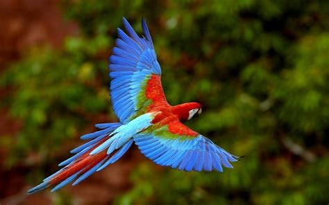 The Gallery Of 15 Most Beautiful Birds Mostbeautifulthings