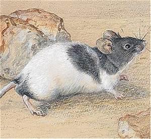 Mäuse Bekämpfen Haus : ultraschall gegen m use ungeziefer im haus ~ Michelbontemps.com Haus und Dekorationen