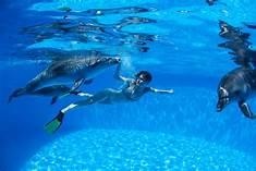 dolphin tour jacksonville