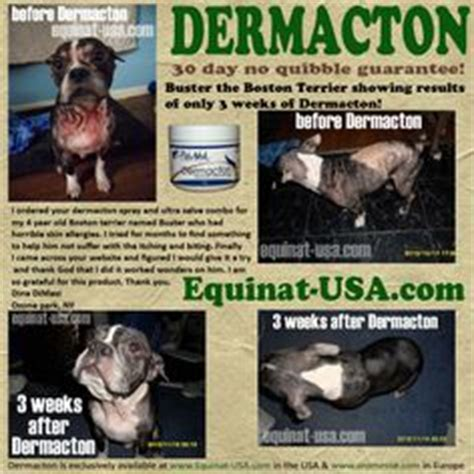 Dog Skin Rash On Canine Caused By Atopic Derma Is