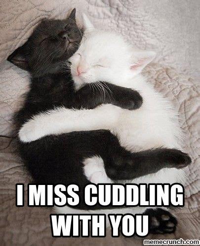 Cuddle Meme - i miss cuddling with you