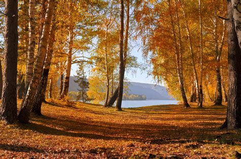 Autumn Forest Free Stock Photo