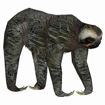 Sloth Toed Three Pygmy
