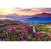 Flower Field Sky Sunlight Landscape Nature Mountains