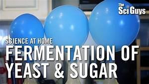 Fermentation Of Yeast  U0026 Sugar