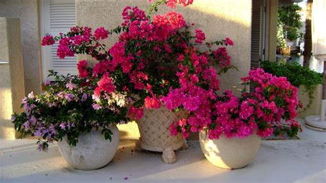 pictures of flowers in pots 15 beautiful flower pots that will inspire you mostbeautifulthings