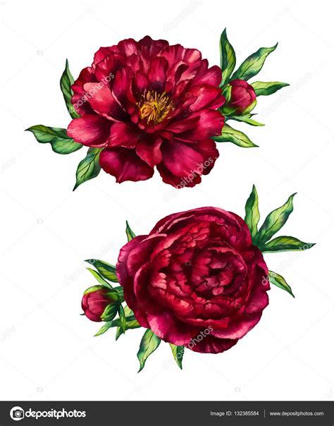 set  watercolor red peonies bouquets stock vector
