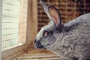 Sinus Infection In Rabbits