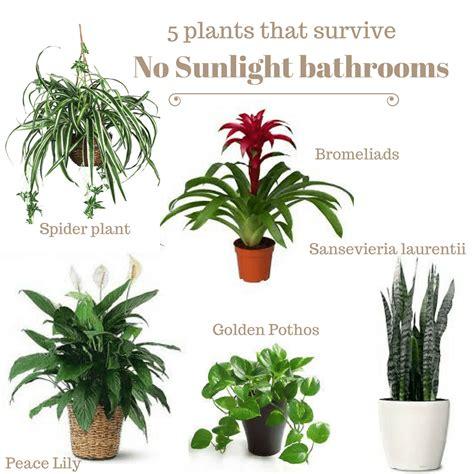 plants  survive dark bathrooms  nbatat taaysh bdorat