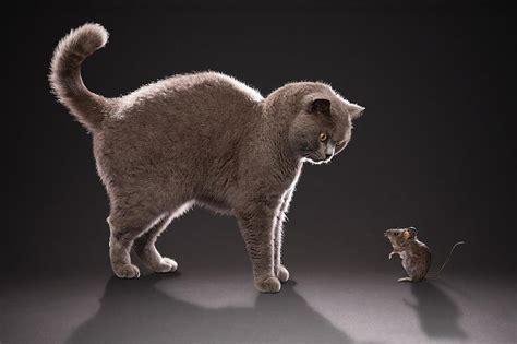 Lietas, ko kaķi par sevi tev neatklās - Spoki