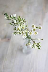 Bouquet Fleurs Blanches : best 25 wax flowers ideas on pinterest bouquet ~ Premium-room.com Idées de Décoration