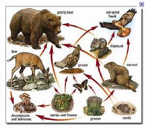 Teacher Matthew 403: Relationships in Ecosystems