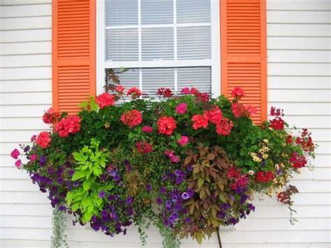 Fenster Blumen Sommer Petunien Veilchen Orange Akzente