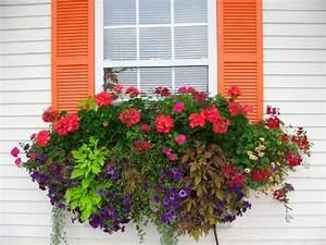 Blumenkästen Bepflanzen Ideen : fenster blumen sommer petunien veilchen orange akzente blumenk sten bepflanzung blumenk sten ~ Eleganceandgraceweddings.com Haus und Dekorationen