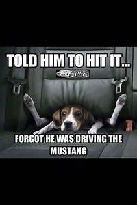 Pin by Zane Yates on By Mustang (With images) | Mustang quotes