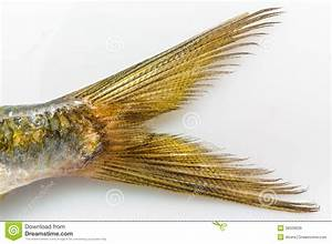 Queue De Poisson Voiture : queue de poissons de sardine du plat blanc images libres de droits image 38329629 ~ Maxctalentgroup.com Avis de Voitures