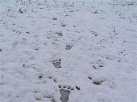 wild animal finders   trail  bigfoot riveredge