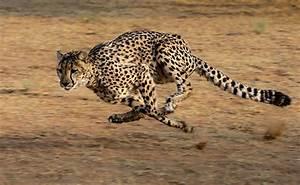 Vitesse Des Animaux : quels sont les animaux les plus rapides au monde sur terre mer et air ~ Medecine-chirurgie-esthetiques.com Avis de Voitures