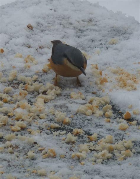 feeding birds in the winter
