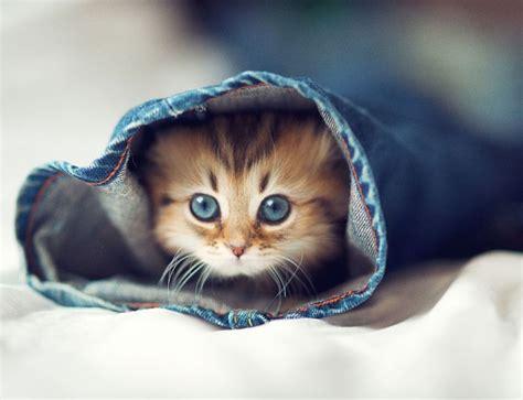 Very Cute Kitten 17 Pics