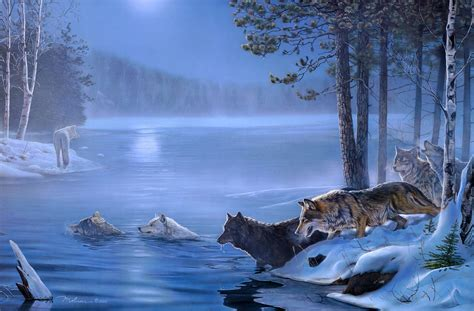 wolf full hd wallpaper  background image