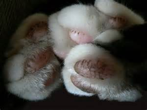 cat paws file cat paws memotions jpg wikimedia commons
