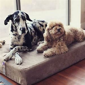 17 best ideas about great dane bed on pinterest dog beds With great dane dog beds
