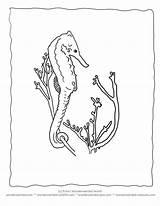 Coloring Seaweed Seahorse Ocean Realistic Plants Colors Activities Wonderweirded Wildlife Seahorses Colorful Designlooter Sea Starfish Recommended Popular Coloringhome sketch template