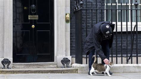larry  cat stays put  upheaval  british politics