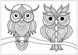 Coloring Owls Simple Patterns Branch Pages Calm Adult Adults Pretty Animals Nature Resting sketch template