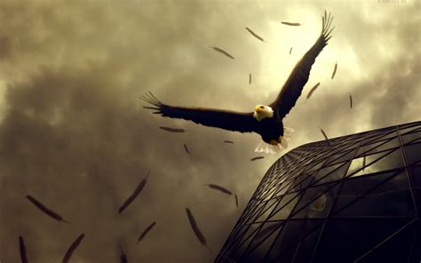 eagle flight wallpapers hd wallpapers id
