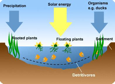 ecosystem processes  cool  revision website